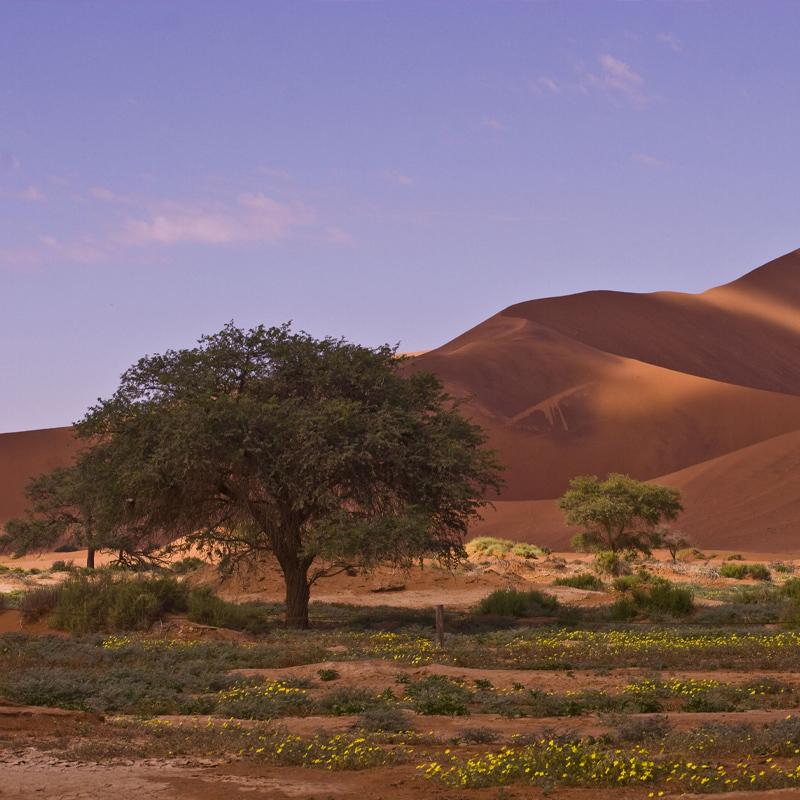 African Sand Dune